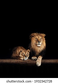 Lion and lioness, animals family. Portrait in the dark.