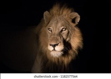 lion national park