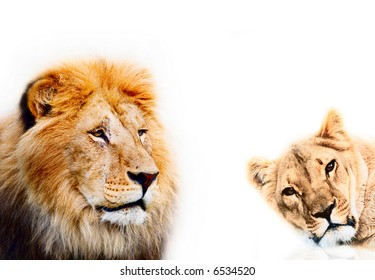 lion on a white background