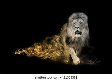 The lion is one of the big five animals you must see in africa, animal kingdom collection, African wildlife