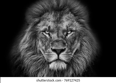 lion portrait black and white with black background