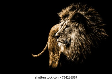 lion portrait in bright golden colours