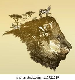 Lion of savanna