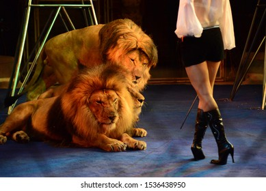 Lion tamers. Tamed lions in circus