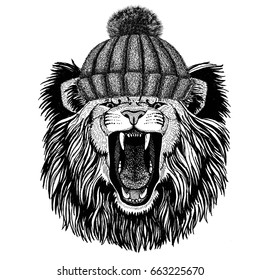 Lion wearing winter knitted hat