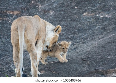 A lioness with a cub stands on the side of a large rock in Masai Mara Game Reserve in Kenya