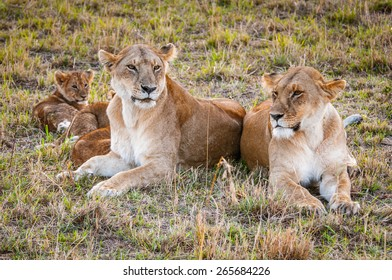 Lioness and her little lion cubs