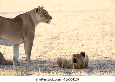 A lioness standing on the side with her cub lying in front of her on it's back in a playful mode.