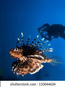 Lionfish and divers