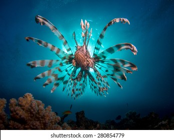 Lionfish in fron of the sun