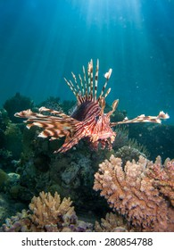 lionfish over coral reek with sun beams