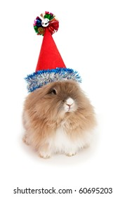 Lionhead rabbit in the New Year hat. In the Oriental calendar 2011 - the year of rabbit.
