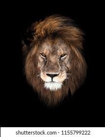 Lion's head portrait