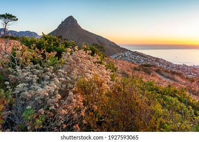 Lion's head at sunset with ocean