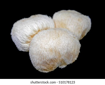Lion's mane mushroom on black background