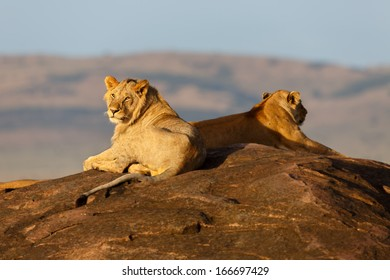 Lions on the rocks of Sand River in Masai Mara, Kenya