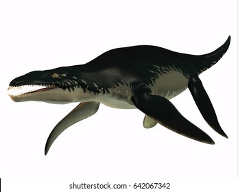 Liopleurodon Side Profile 3d illustration - Liopleurodon was a carnivorous marine reptile that lived in Jurassic seas of France and England.