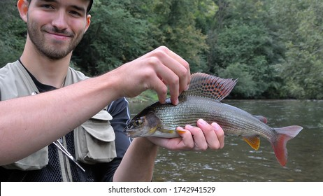 Liptov region, Slovakia - August 5, 2015: The grayling (Thymallus thymallus) is the main destination for fly fishing on the rivers of Slovakia