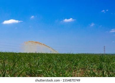 Liquid fertilizer(vinhoto, vinhaça, garapão ou tiborna) being thrown in sugar cane plantation. Garapa.