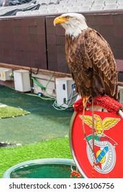 Lisboa, Portugal - April 2018: Eagle at Estadio da Luz arena - the official symbol of FC Benfica