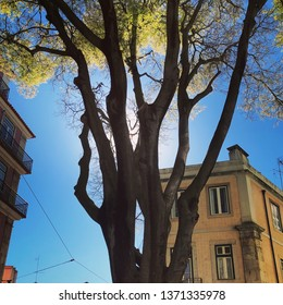 Lisbon / Portugal - March 19 2019: Sun behind tree and building on clear blue sky day in Lisbon, Portugal