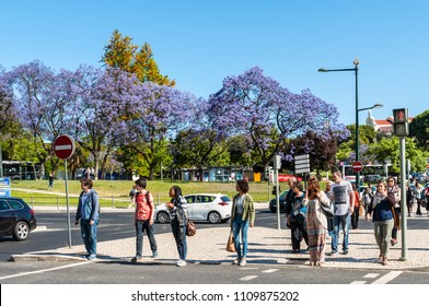 Lisbon, Portugal - May 19, 2017: People waiting to cross street in Lisbon, Portugal. Blossoming jacaranda trees in the background.