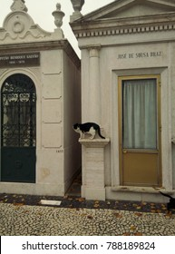 Lisbon, Portugal - November 2017: Prazeres Cemetery. Crypts of dead citizens with curtains in the doors and cats playing around.