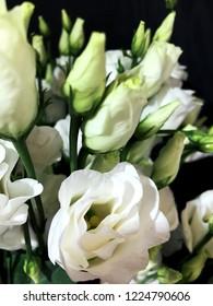 Lisianthus, Eustoma. White flowers on dark texture background