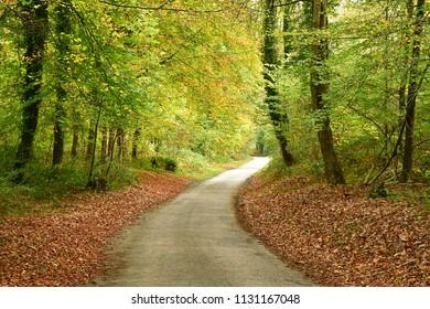 Lisors; France - november 1 2017 : road in Lyons forest