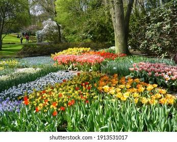 Lisse, The Netherlands; 04 14 2012: Tulips in the Keukenhof Gardens in Amsterdam