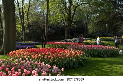 Lisse, Netherlands - April 19, 2018:  Colored blooming tulips in keukenhof gardens with a beautiful sunlight