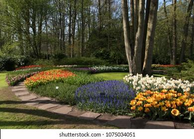 Lisse, Netherlands - April 19, 2018: Beautiful colors of flowers in the world-famous flower park Keukenhof