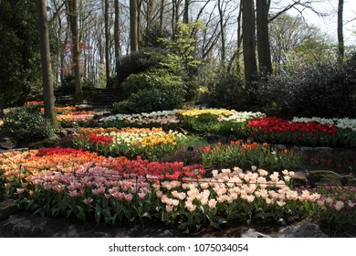 Lisse, Netherlands - April 19, 2018:  The beautiful sunlight falls over the flowerbeds in keukenhof bloemenpark