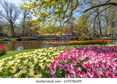 LISSE, NETHERLANDS - April 19, 2019:  Many tourists visit the Keukenhof, where the Tulip Festival 2019 is underway, to enjoy the blooming spring flowers.
