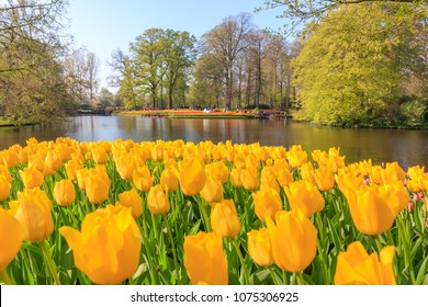 Lisse, Netherlands - April 20, 2018: Keukenhof Park in Holland