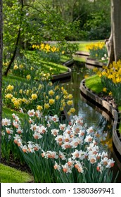 Lisse, Netherlands. April 2019. Daffodil and narcissi next to the water at Keukenhof Gardens, Lisse, South Holland. Keukenhof is known as the Garden of Europe.