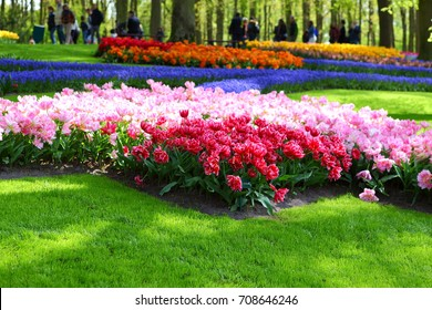 LISSE, THE NETHERLANDS – APRIL 29, 2017: beautiful flower bed with blooming colorful tulips in Keukenhof gardens in Lisse, the Netherlands