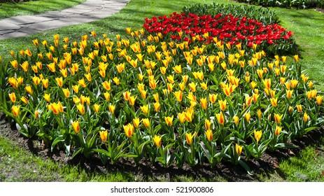LISSE -NIDERLANDY-APRIL  2013: Royal flower park Keukenhof, tulips.