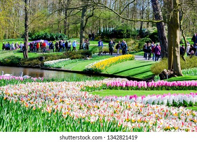 Lisse-Netherland: April 14,2015: Landscape non focus , Keukenhof park in spring season with cherry blossom flower trees with background tulips flower, green field and tourist , beautiful garden