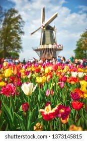 LISSE/NETHERLANDS - April 22, 2018: Blooming tulips in the Keukenhof park with a windmill at the background