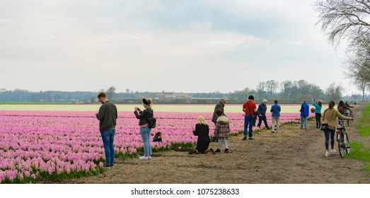 Lisse/Zuid-Holland / The Netherlands - April 15th  2018 - a crowd of people watching, enjoying and walking along the famous flowerfields in The Netherlands, Lisse