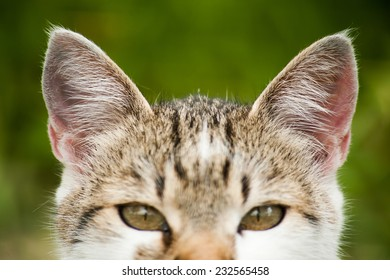 Listened yellow eyed kitty cat on homogeneous green background