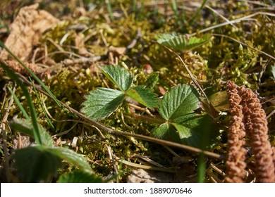 vegetácia trávy a listy rastlín - Shutterstock ID 1889070646