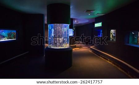 Lit Fish Tanks Aquarium Stock Photo Edit Now 262417757 Shutterstock