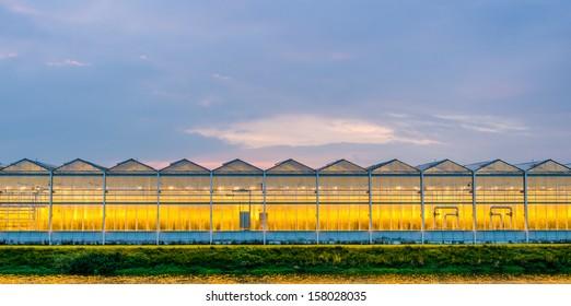 Lit greenhouse at night - Netherlands