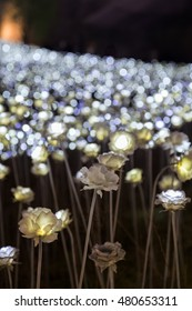 A lot of lit LED rose flowers at the Dongdaemun Design Plaza in Seoul, South Korea at night. Focused on the front part.