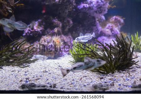 Lit Sea Life Tank Aquarium Stock Photo Edit Now 261568094