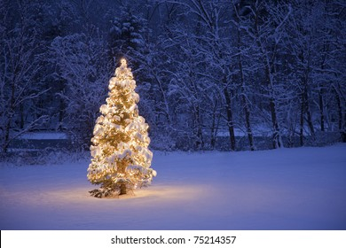 A lite Christmas Tree in a field with a river and forest in the background