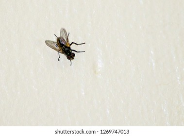 A literal picture of a fly on the wall to represent the idiom of a fly on the wall meaning eavesdrop and observe without people noticing you.