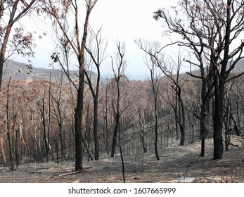 Lithgow, New South Wales, Australia. Jan 2020. A view of burnt land near Lithgow in the Blue Mountains west of Sydney.